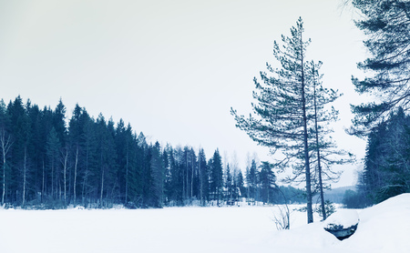 covered fields: Winter landscape, frozen lake under snow layer with pine trees growing on the coast, blue toned natural background photo Stock Photo