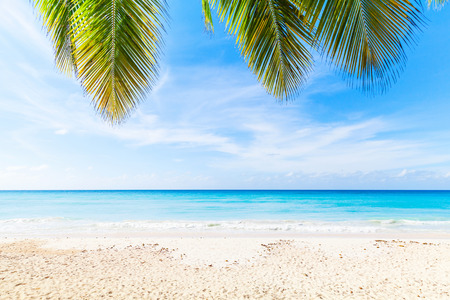 Tropical beach background, white sand, azure water and palm tree branches over blue sky.  Caribbean Sea coast, Dominican republic, Saona island