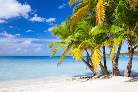 Coconut palms grow on white sandy beach. Caribbean Sea, Dominican republic, Saona island coast Stock Photo