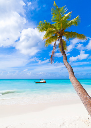 Coconut palm grows on white sandy beach of Saona island. Caribbean Sea coast, Dominican republic, vertical photo Imagens