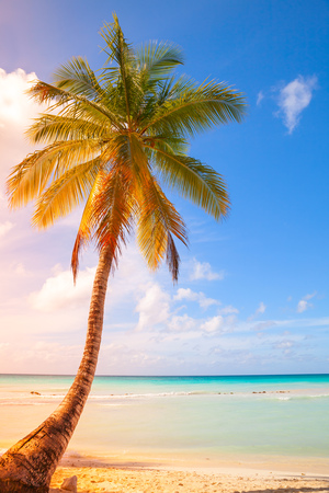 Palm tree grows on white sandy beach. Caribbean Sea, Dominican republic, Saona island. Vertical photo with colorful tonal correction gradient filter effect