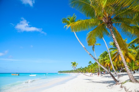 Landscape with coconut palms growing on sandy beach. Caribbean Sea, Dominican republic, Saona island coast, popular touristic resort