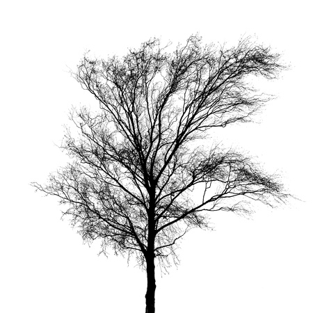 Black bare tree photo silhouette isolated on white background Stock Photo