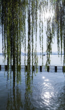 Branches of weeping willow growing on the coast of West Lake. Popular park of Hangzhou city, China Stock Photo
