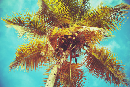 Coconut palm tree leaves under bright sky background. Colorful tonal correction photo filter effect
