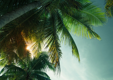 Palm trees leaves silhouette under tropical evening sky background. Vintage stylized photo with colorful tonal filter effect Stock Photo