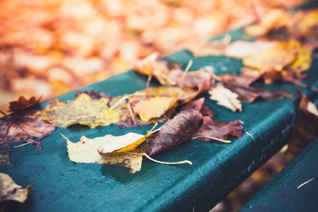 Fallen yellow autumn leaves lay on green wooden park bench, background photo with selective focus