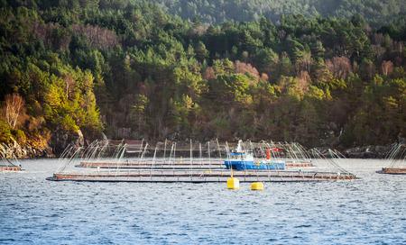 Norwegian fish farm for salmon production in natural environment. Sea fjord, Trondheim region