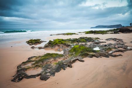 ポルトサント島、マデイラ諸島、ポルトガルのビーチで緑の海藻と湿った沿岸石