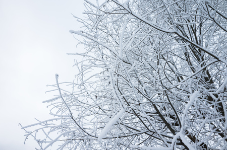 Tree branches with show and frost, winter natural,  background photo