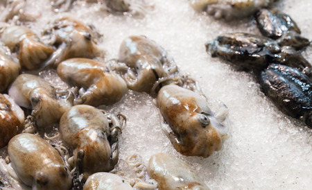 Fresh octopuses and cuttlefishes lay on ice in seafood shop Stock Photo