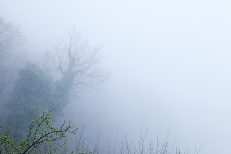 Trees silhouettes over blue foggy landscape, natural photo