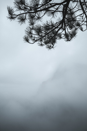 Pine tree branches silhouette over blue foggy mountain landscape, natural vertical photo