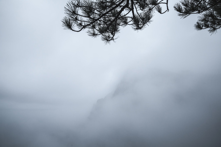 Pine tree branches silhouette over blue foggy mountain landscape