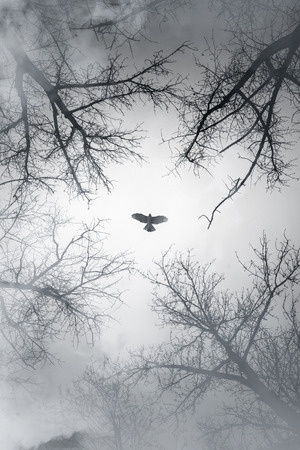 Falcon flying in sky over cloudy forest, vertical stylized photo background 版權商用圖片