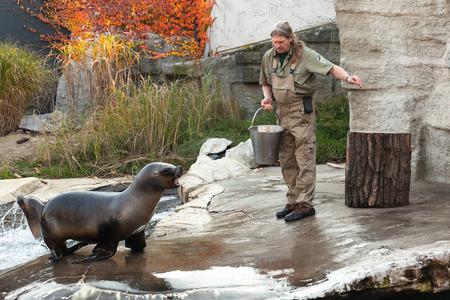 Viena, Austria - 3 de noviembre de 2015: el cuidador del zoológico de Viena alimenta a los leones marinos con pescado fresco