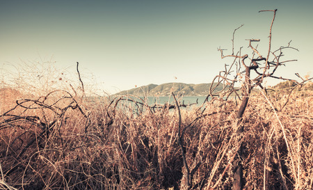 Dry grass and bushes with still sea on a background. Coastal landscape of Zakynthos island, Greece. Vintage toned photo