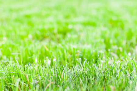 Fresh green grass of just trimmed lawn, background photo with soft selective focus