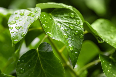 Natural background photo, green leaf and water droplets