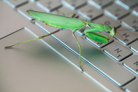 Software bug metaphor, green mantis is on a laptop keyboard with English and Russian letters Imagens