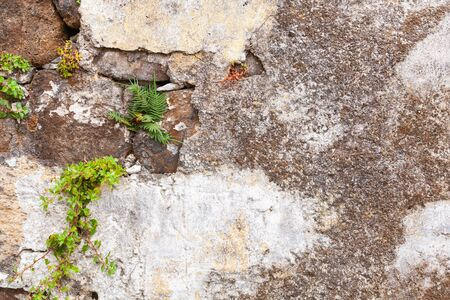 Old gray stone wall with green leaves, background photo texture