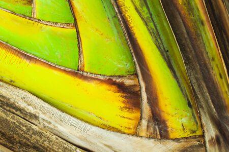 Tropical leaf pattern, natural background. Macro photo taken in Malaysian rainforest Reklamní fotografie