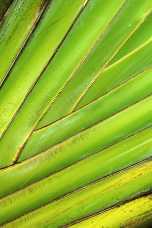 Tropical leaf pattern, natural vertical background. Macro photo taken in Malaysian rainforest
