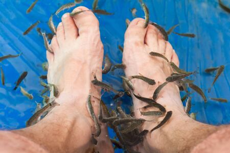 Doctor fish cleaning male feet in a spa. Garra rufa or red garra fish Stockfoto