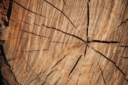 Circular pattern with cracks of an old brown wooden log section Stockfoto
