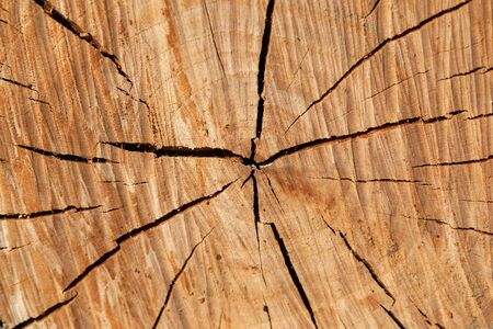 Circular wooden pattern with cracks of a log section