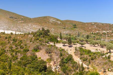 Coastal rural landscape with olive trees at sunny day. Zakynthos, Greece