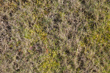European forest ground covered with moss and grass, top view, natural background photo texture