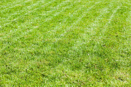 Trimmed lawn at summer sunny day, fresh green grass background photo Imagens