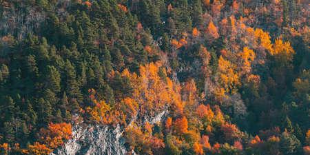 Norwegian mixed forest growing on coastal mountain in autumn season, natural background photo texture