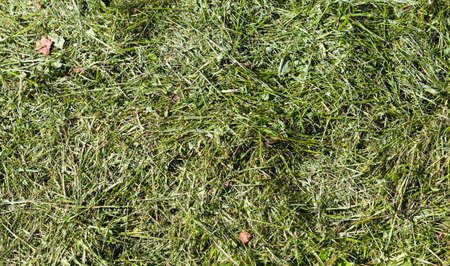 Green grass trimmings or mulch, natural background photo texture