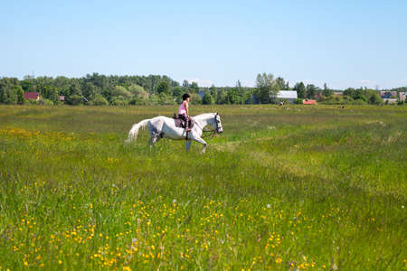 Little girl rides a white horse breed Orlov trotter over a meadow at sunny day