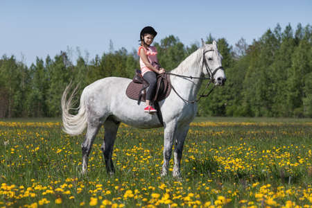 Pretty European girl is on a white horse breed Orlov trotter at sunny day Imagens
