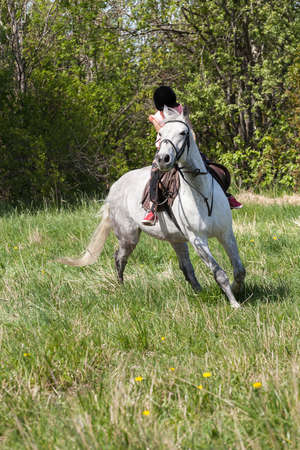 Little girl rides a white horse breed Orlov trotter, vertical photo Stockfoto