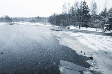 Winter landscape with forest on a frozen river coast. Kovashi river, Sosnovy Bor, Russia