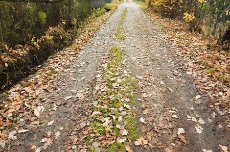 Rural road perspective view with fallen yellow leaves on it. Background photo.