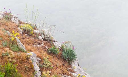 Mountain Crimean landscape with flowers growing on rocks on a foggy summer day. Crimea peninsula, Black Sea coast Foto de archivo