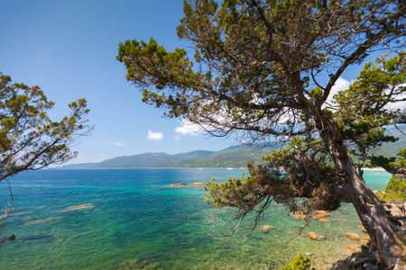 Pine trees grow on coast of Cupabia beach. Coastal landscape of Corsica island on a sunny summer day, France 版權商用圖片