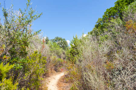 South Corsica, summer landscape with narrow trail goes through tall dry grass 版權商用圖片