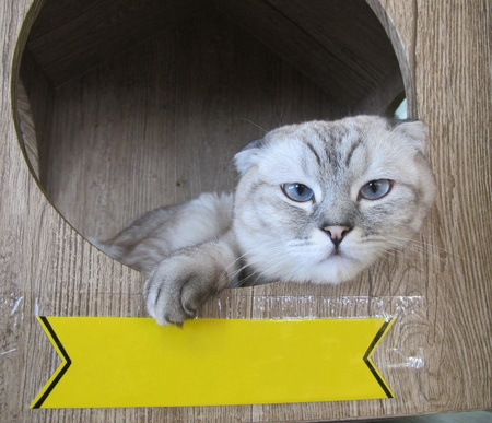 felis silvestris catus: Domestic cat (Felis silvestris catus) in a box with a blank sign looking at camera