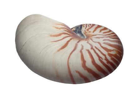 golden ratio: Una vista exterior de la concha de un nautilo (Nautilus Pompilio) Foto de archivo