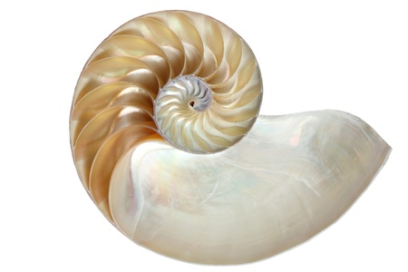 golden ratio: El interior de un Chambered Nautilus (Nautilus Pompilio) de shell, que muestra a la madre-de-perla Foto de archivo