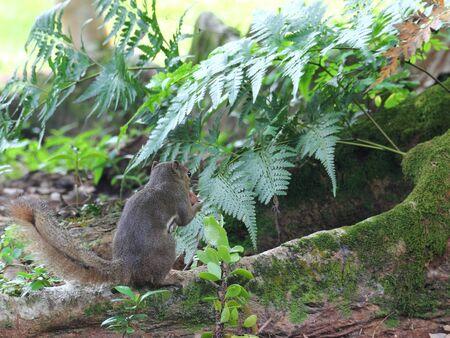 egoista: Ardilla comiendo frutos secos con la espalda a la c�mara