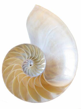 golden ratio: Un tiro macro de la parte interior de una c�scara del nautilus aislado en un fondo blanco