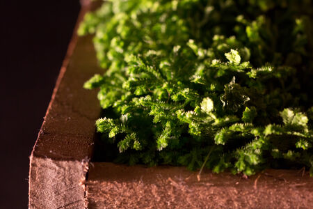 sidelit: Macro view of moss lit from the side in a wooden box