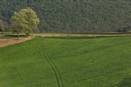 flanked: A country road flanked by open fields and rolling hills in Tuscany Italy